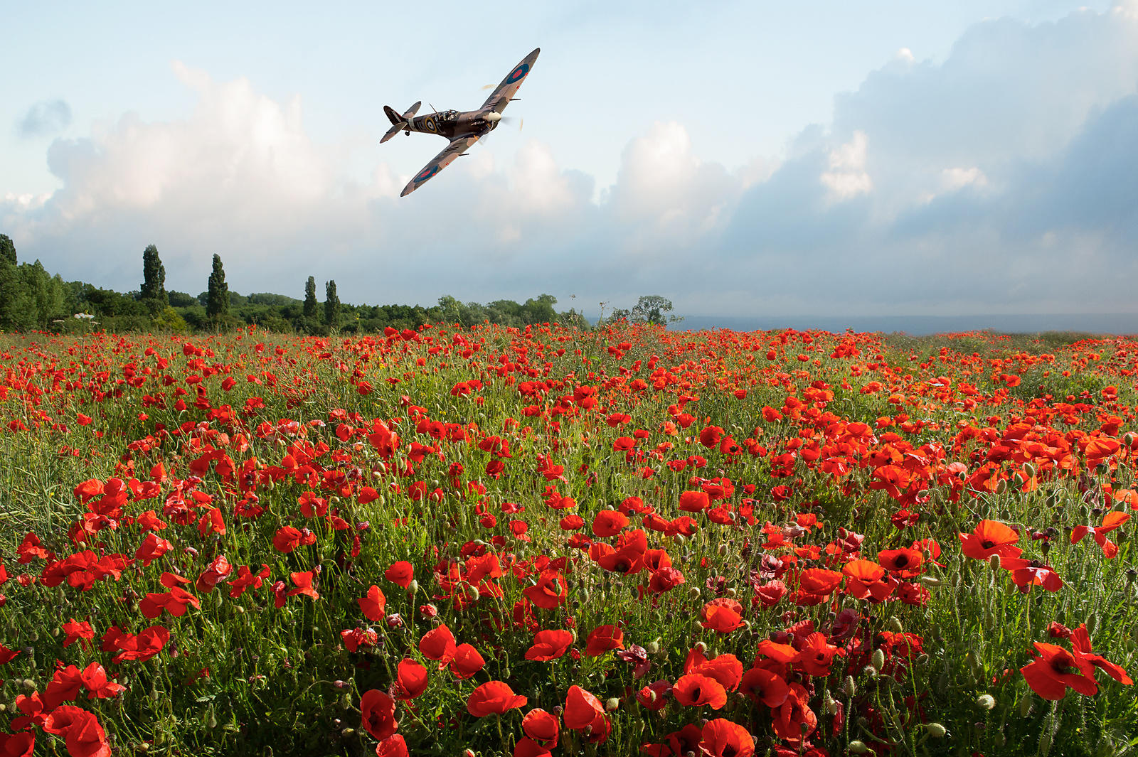 Poppies and RAF Spitfire Vb