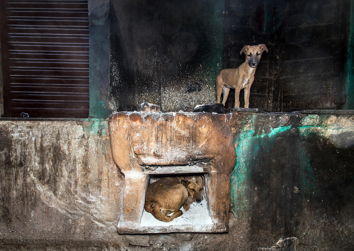 Street dogs sleep on a warm oven in an alley full of sweets shops, Pushkar, Rajasthan, India