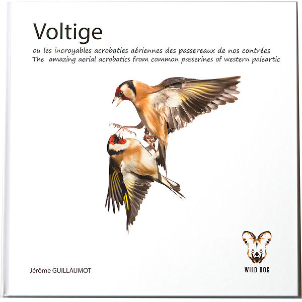 Voltige - Photos of Birds in flight with white background