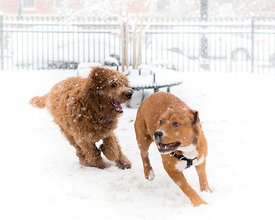 CircleSnowDogs-20150305-011