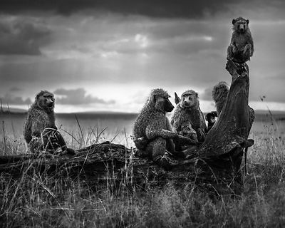 01926-Baboons_family_Kenya_2018_Laurent_Baheux