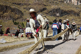A man aligns the thin grass ropes prior to making the thicker ropes for rebuilding the bridge, Q'eswachaka , Canas province ,...
