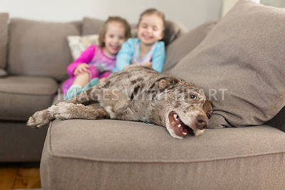 happy dog laying down inside on couch with blurred view of children