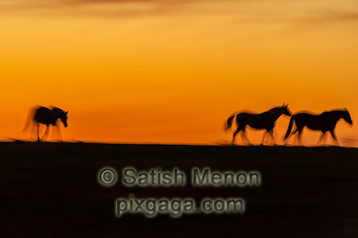 Horses against dusk sky, Sierra Road, San Jose, CA, USA