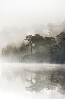 Misty dawn in Glen Affric - BP2986B