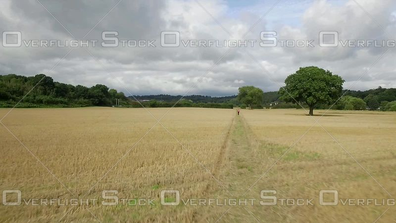 Woman Walking Through Farmers Fields Shropshire United Kingdom