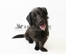 black rescue dog in front of white background