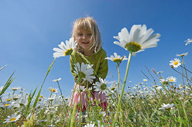 Young girl in field of Ox-eye Daisies Norfolk summer - Model Released