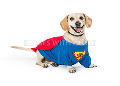 Happy Dog Wearing Super Hero Costume