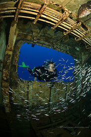 Woman diver and silversides, C-53 Wreck, Cozumel, Mexico