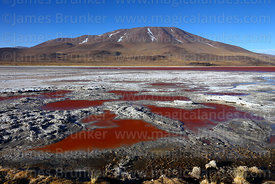 Red pools in mud on shore of Laguna Colorada and Cerro Chijlla volcano, Eduardo Avaroa Andean Fauna National Reserve, Bolivia