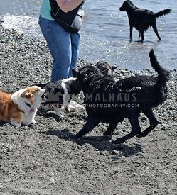 Dog Behavior at the Dog Beach