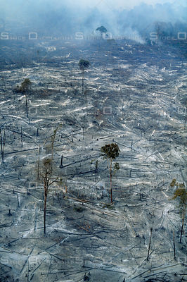 Smoldering Deforestation of Amazon Rainforest Brazil