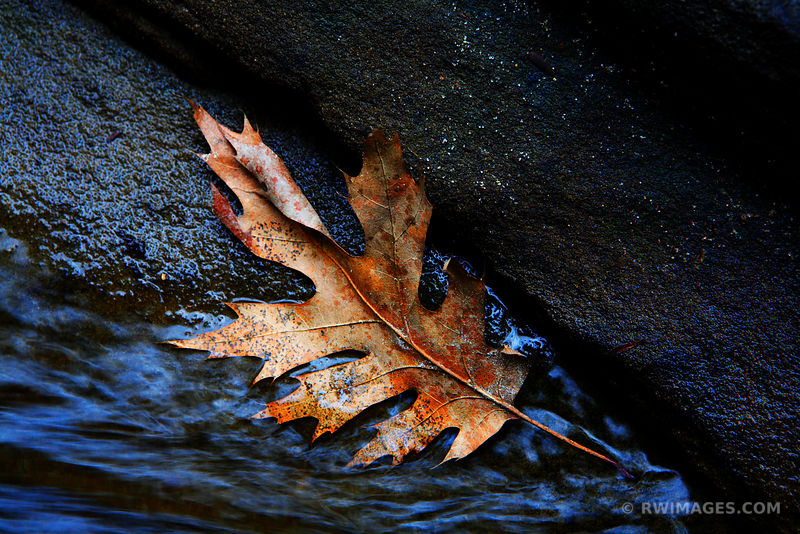 THE LEAF, THE ROCK AND THE WATER