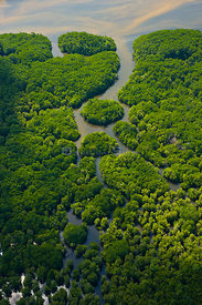 Aerial view of lowland rainforest on banks of River Kinabatangan, Sabah, Borneo, Malaysia. 2007