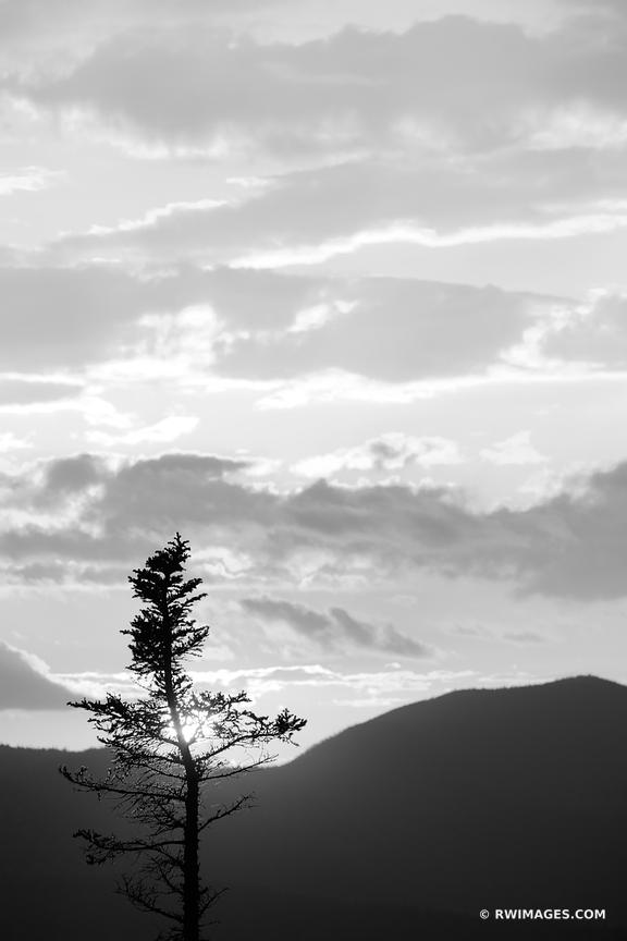 SUNSET TREE KANCAMAGUS PASS WHITE MOUNTAINS KANCAMAGUS HIGHWAY NEW HAMPSHIRE BLACK AND WHITE VERTICAL