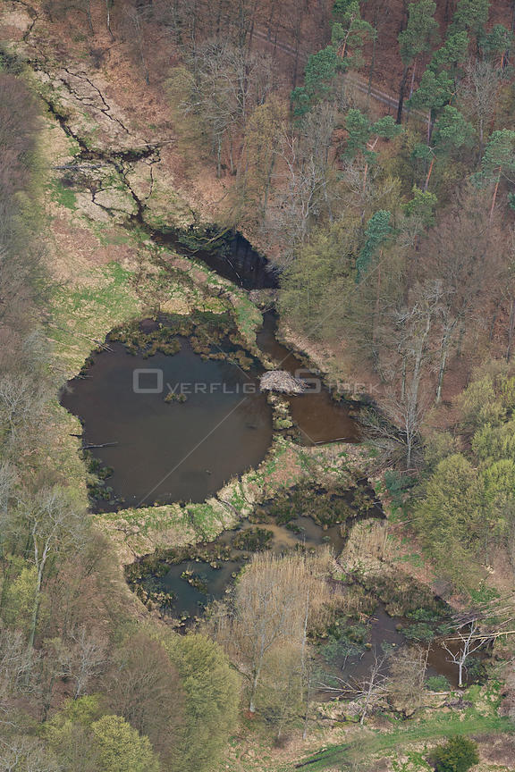 Aerial view of European beaver (Castor fiber) habitat and  structures.  Beaver ponds, lodge, dams and felled trees  are visib...