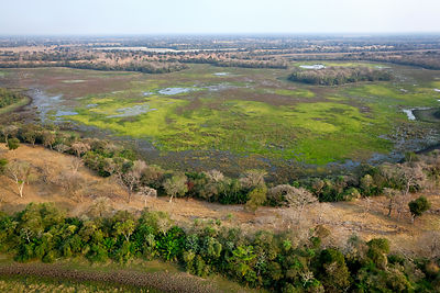 Pantanal landscape during dry season, aerial view, Brazil, August 2010.