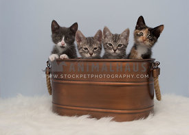 four kittens in copper tub