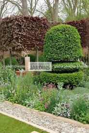 Buxus sempervirens 'Rotundifolia' (buis taillé), topiaire. Paysagiste : Arne Maynard, CFS, Angleterre