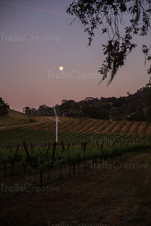 Full moon hanging over the vineyards with vineyard fan