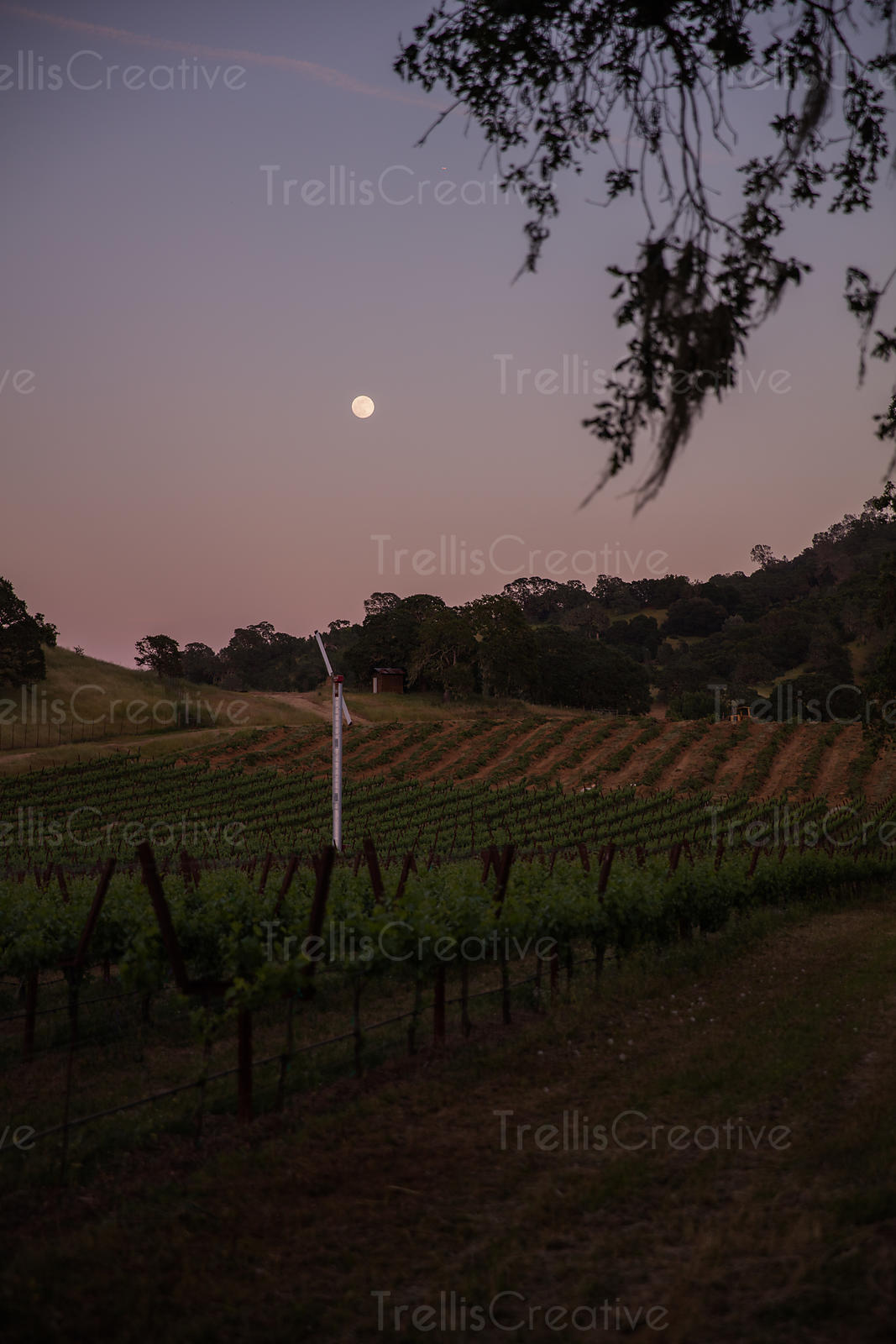 Vines & Vineyard Landscapes