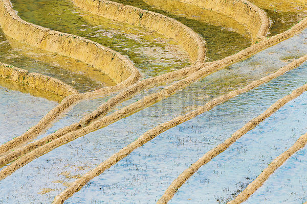 Rice Paddies Prepared for Planting