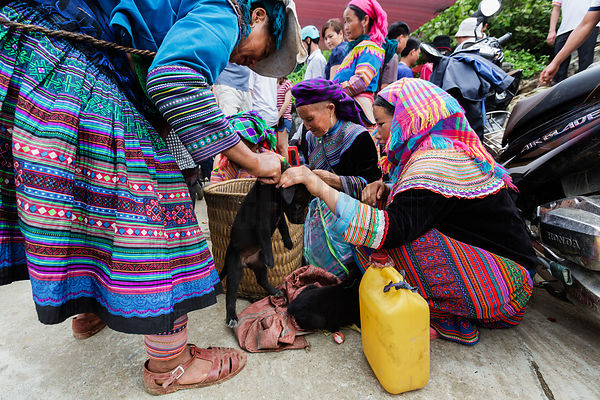 Flower Hmong Women Trading Puppies