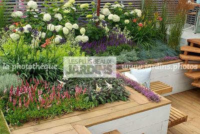 Aromatic plant, Border, Border with flowers, garden designer, Perennial, Terrace, Thyme, Contemporary Terrace, Digital