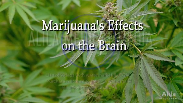 Marijuana effects on brain NARRATED, part 2