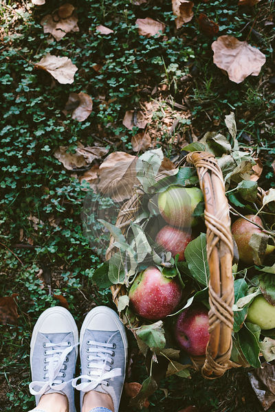 A woman photographed a basket full of apples from the top view with her feet wearing snickers.