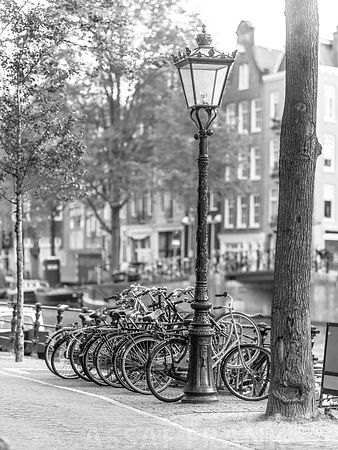 Bicycles parked along street, Amsterdam