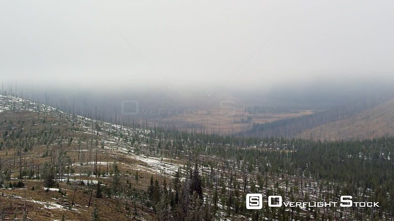 Low clouds and fog hang over meadows and young forestst in Yellowstone National Park