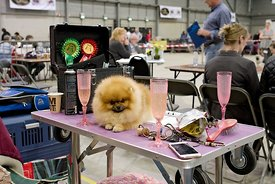 Hondenshow Goes | Dogshow Goes