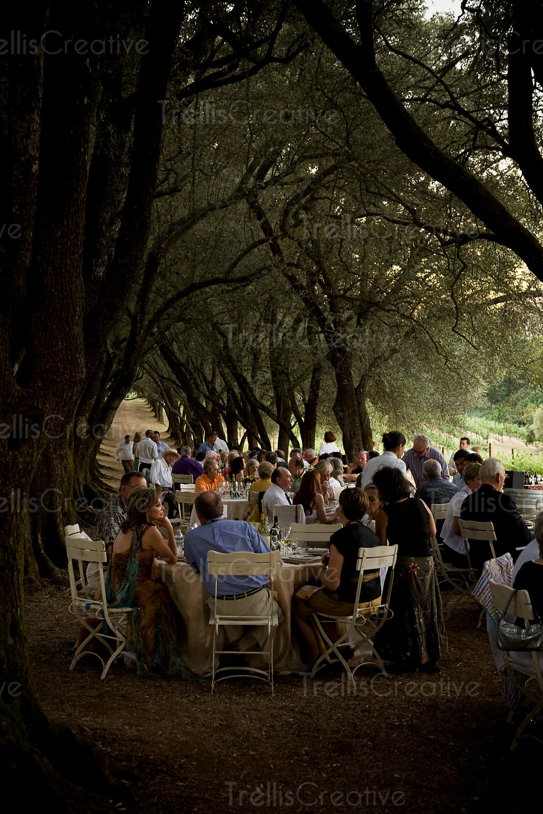 Party guests sit at tables beneath a grove of old olive trees