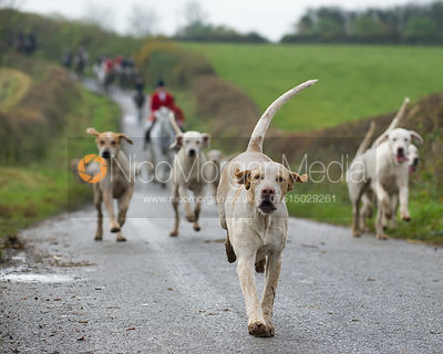 Andrew Osborne and the Cottesmore Hounds - The Cottesmore Hunt at Tilton on the Hill 10/11/12