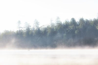 Foggy Cool Morning on Lake in Woods