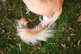 close up of lurcher tail on grass