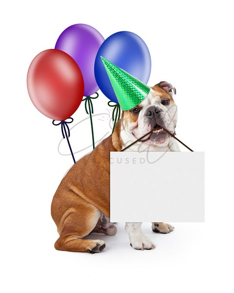 Birthday Dog Holding Blank Sign With Balloons