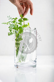 Woman's hand arranging fresh herbs in a glass with large artisan ice cubes.