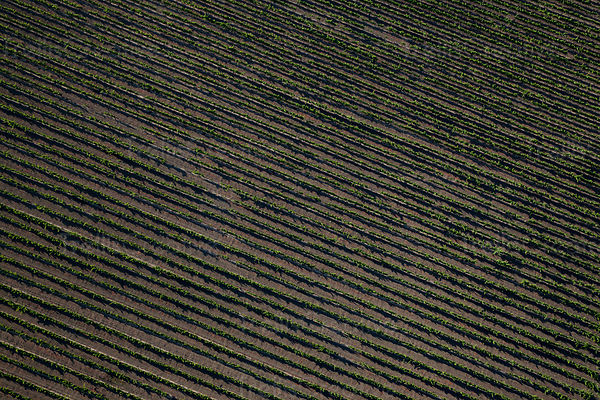 Aerial view of a Napa Valley vineyard