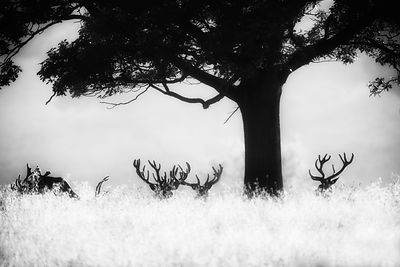 The long grass almost looks like snow and the antlers of the stags somehow match the trees own branches