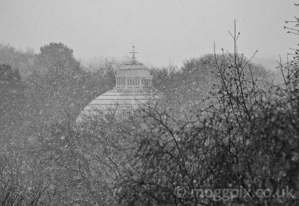 A Palm House Blizzard