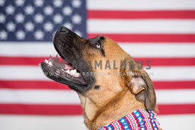 Profile of a dog in front of the American Flag
