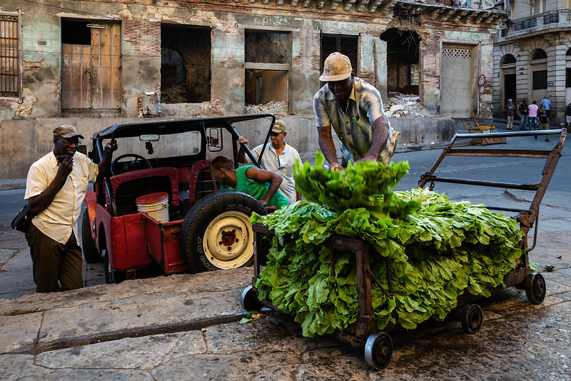 Merchant Unloading Greens from Jeep