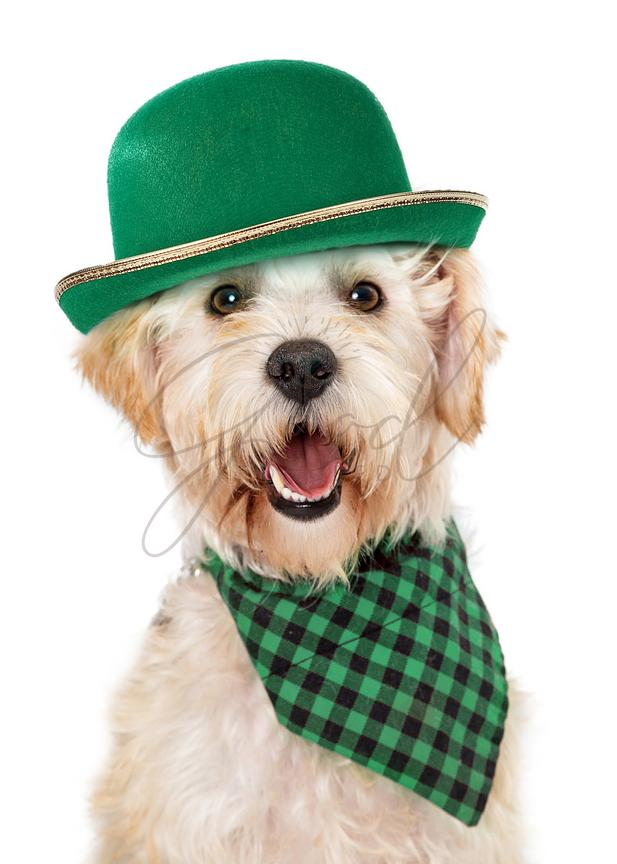 Happy Irish Dog Celebrating St Patricks Day