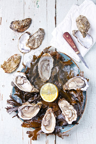 Open oyster with seaweed and ice on wooden background