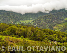 Boquete Cloud Forest 4 | Paul Ottaviano Photography