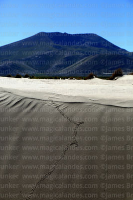 Lizard tracks on sand dune near Copacabana, Cordillera de Sama Biological Reserve, Bolivia