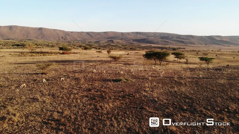 Suswa Region of the Great Rift Valley Kenya